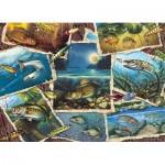 Cobble-Hill-80209 Fish Pics