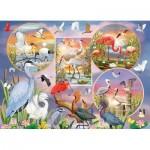 Cobble-Hill-80219 Waterbird Magic