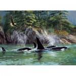Cobble-Hill-80249 Orcas