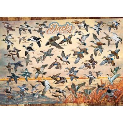 Cobble-Hill-80263 Ducks of North America