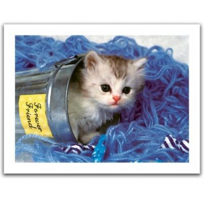 Pintoo-H1040 Puzzle en Plastique - Kitten