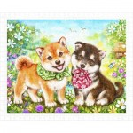 Pintoo-H2281 Kayomi - Shiba Puppies' First Errand