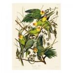 Puzzle-Michele-Wilson-A520-650 Audubon - Les Perruches