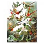 Puzzle-Michele-Wilson-A539-500 Puzzle en Bois - Ernst Haeckel - Les Colibris