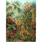 Puzzle-Michele-Wilson-A736-350 Puzzle en Bois - Ernst Haeckel - Planche Botanique