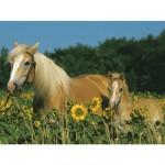 Ravensburger-12628 Mon cheval