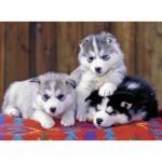 Ravensburger-12823 Pièces XXL - Mignons Huskies
