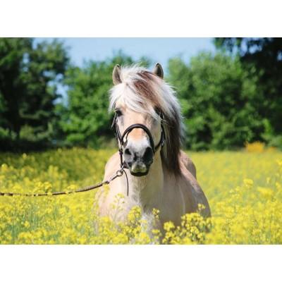 Ravensburger-15038 Cheval dans le Champ de Fleurs
