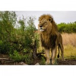 Ravensburger-15160 Nature Edition No 14 - Lion