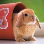 Ravensburger-15223 Mignon petit lapin