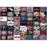 Schmidt-Spiele-58297 Collage Fleurs