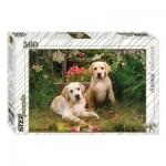 Step-Puzzle-78076 Labradors