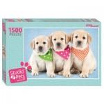 Step-Puzzle-83300 Studio Pets