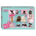 Step-Puzzle-84300 Studio Pets
