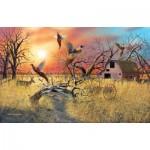 Sunsout-17930 Mark S Anderson - Pheasant Flight