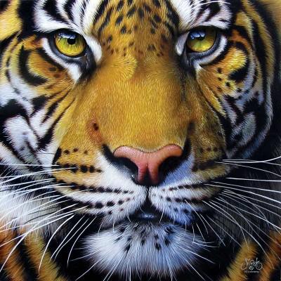 Sunsout-58628 Jurek - Golden Tiger Face