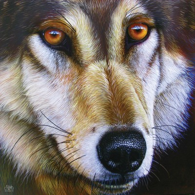 Sunsout-58644 Jurek - Wolf Face