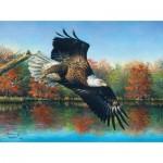 Sunsout-69607 Abraham Hunter - Wetlands Eagle