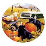 Sunsout-73434 Pumpkin Patch