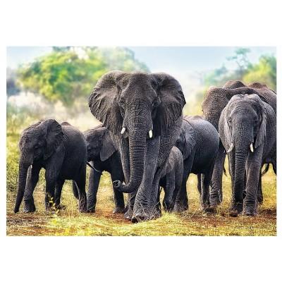 Trefl-10442 Éléphants africains