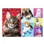 Trefl-10591 Happy Cats