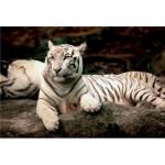 Trefl-26075 Tigre du Bengale