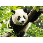 Trefl-37142 Panda géant