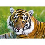 Trefl-37192 Tigre
