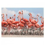 Dino-50250 Flamingoes