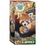 Eurographics-8251-5557 Save the Planet - Red Pandas