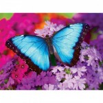 Master-Pieces-31622 Iridescence - Butterfly
