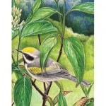 New-York-Puzzle-CB1860 Golden-winged Warbler Mini