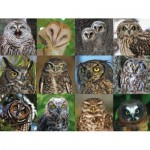 New-York-Puzzle-CB2085 Owls and Owlets