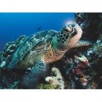 New-York-Puzzle-NG1988 Pièces XXL - Green Sea Turtle