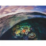 New-York-Puzzle-NG1989 Great Barrier Reef