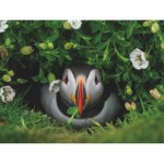 New-York-Puzzle-NG1991 Puffin Chick