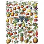 New-York-Puzzle-PD1919 Fruits