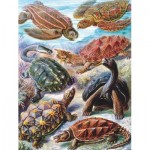 New-York-Puzzle-PD1922 Vintage Images - Tortues