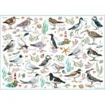 Otter-House-Puzzle-75510 Seabirds